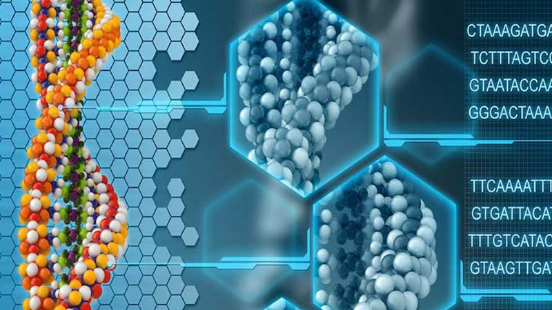 genetic studies molecular human gene